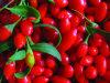 Goji Berry/Organic Goji Berry/Chinese Goji Berry