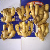 Fresh Ginger /Dried Ginger Price /Ginger Buyer /Ginger Seeds