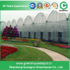 Tunnel Greenhouse for Vegetable Growing with Steel Structure