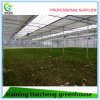 High Quality Plastic Sheet Tube Commercial Green House for Sale