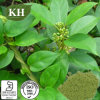 Kingherbs Natural Gymnema Extra Acid 25 75% by HPLC;