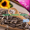 Export to Middle East Sunflower Seeds 363 with Good Quality and Hot Sales