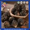 100% Natural Peru Maca Root for Men Product