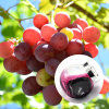 Grape Skin Extract Red E4