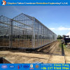 Cover Muti-Span Greenhouse with Hydrdoponic Systems for Aquaponics