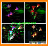 3 in 1color Changing LED Garden Light Powered by Solar