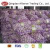 Top Quality Fresh Normal White Garlic in Meshbag