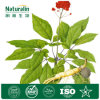 Wild Ginseng Extract, 80% Ginsenosides (UV-VIS)
