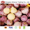 Competitive Price High Quality Fresh Solo Garlic