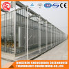 Agriculture Stainless Steel PC Sheet Greenhouse for Vegrtable