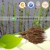 Top Grade Natural Herb Medicine Equisetum