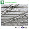 Glass/Hollow Tempered Glass Green House with Ventilation System