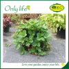 Onlylife Square Outdoor Garden Planter Bag Economical Grow Bag