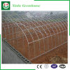 Plastic Film Greenhouses Hydroponics System for Vegetables/Flowers/Fruit
