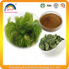 Mulberry Leaf Extract Powder with Dnj for Weight Loss
