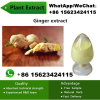 China Factory Natural Ginger Extract Powder Ginger Plant