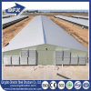House Design Galvanized Steel Frame Poultry Farm for Broiler Layer