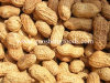 Shandong Roasted Peanut
