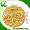 Hot Sale Granular or Powder Compound NPK Fertilizer