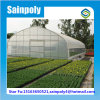 Economical Tunnel Greenhouse for Agricultural