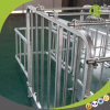 Galvanized Gestation Sow Crates Industrial Pig Farm Equipment