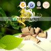 Herbal Medicine Clearing Heat Antitoxicant Honeysuckle Stem