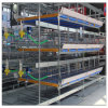 Poultry Broiler House H Type Chicken Battery Cage Farm Equipment