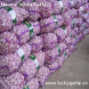 New Crop China Normal White Garlic