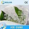 Koller Edible Cube Ice Machine in Hot Area
