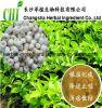 100%Natural Pinellia Extract, Rhizoma Pinelliae Extract Powder