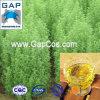 Manufacturer Supply Artemisia Absinthium Oil