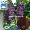 Grape Juice Drink Powder with Free Sample