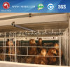 Poultry Equipment Feeder H Type 5 Tiers Layer Chicken Cage
