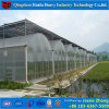 Hot DIP Galvanized Steel Durable PC Sheet Greenhouse
