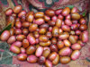 Chinese New Crop Fresh Shallot for Exporting