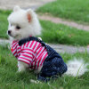 New Design Pet Clothes Waterproof Dog Coat for Winter