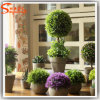 China Supplier Miniature Indoor Plants Bonsai Grass Ball