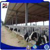 Sound Insulated Prefabricated Metal Structure for Cattle Farm House