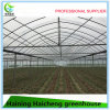 Multi-Span Film Greenhouse with Side Vent and Roof Vent
