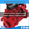 Famous Brand Cummins Diesel Engine and Related Parts (ISLe)