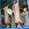 Europe Style Pig Abattoir Machinery