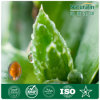 GMP Certified Top Quality Natural Aloe Vera Extract