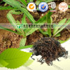 Expectoranting Abscess Natural Herbal Medicine Patrinia