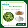 Green Tea Extract EGCG 40%, 90%, 95%, 98%