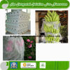 UV PP Agriculture Non Woven Fabric