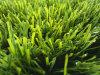 Artificial Grass for Football Field (A650418ZT11001)