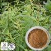Natural Lemon Verbena Extract 10: 1