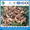 2016 Chinese Fresh Ginger with High Quaulity