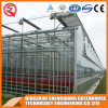 Multi-Span Steel Structure Polycarbonate Sheet Greenhouse