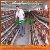 High Quality Chicken Coop for Kenya/Nigeria Chicken Farm
